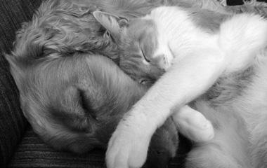 Accessoires chien & chat